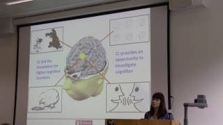 Dr Gillian Forrester - Cerebral lateralization and the evolution of human cognition