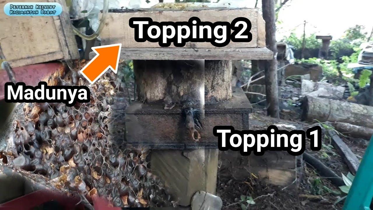 Info Trigona 16. Penampakan isi stup topping kedua setelah topping pertama dimasuki broodcell