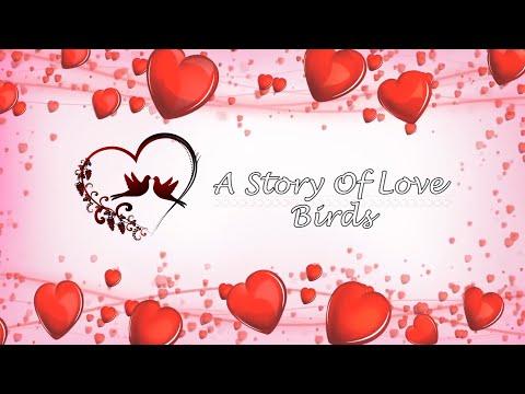 Wedding clip, A Story Of Love Birds Trailer