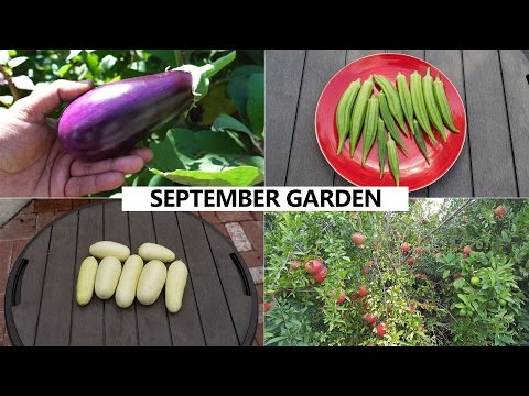 The California Garden In September - Harvests & Fall Planting Guide