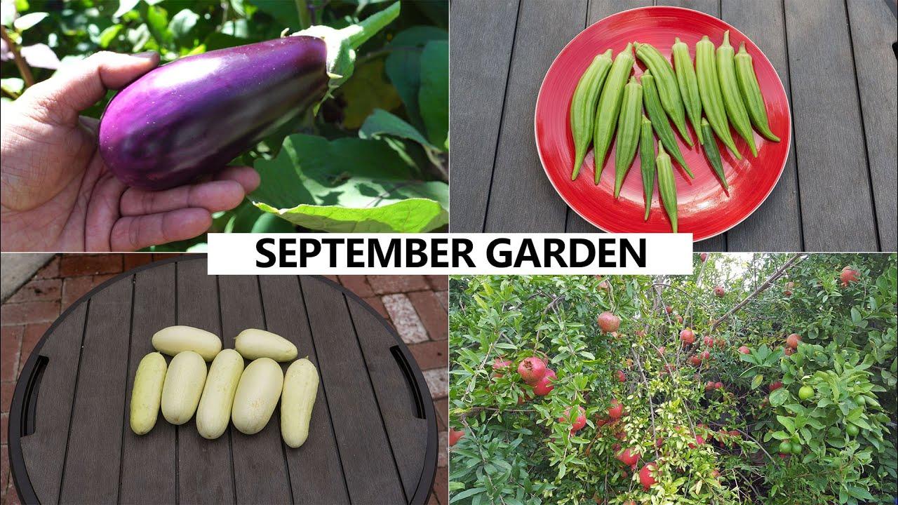 the california garden in september harvests u0026 fall planting