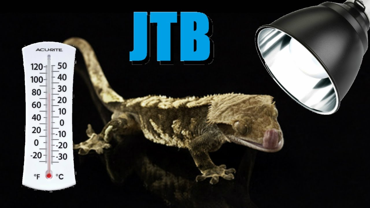 Superb Crested Gecko Heating And Lighting Gallery