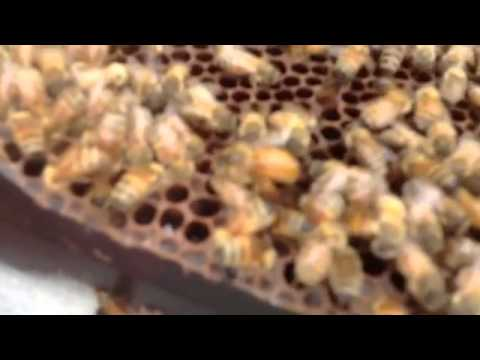 Raising Queen Bees at Sleeping Bear Farms