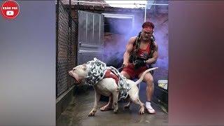 Không Phải Cứ Có Tiền Là Nuôi Được 5 Loài Chó Siêu Khủng Này-Hãy Cẩn Thận Con Số 4|Khám Phá Tube