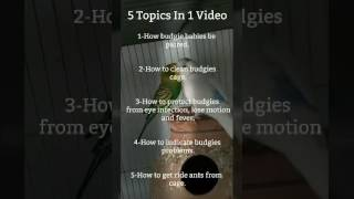 5 BASIC TOPICS OF BUDGIES FOR BEGINNERS IN URDU