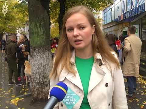 Новини Житомирщини: Захист тварин