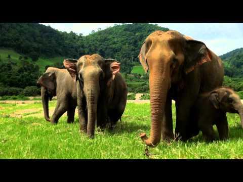 Elephant Song : Kamahl