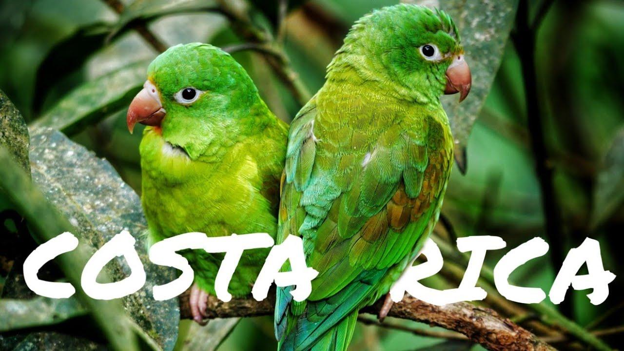 Costa Rica - PURA VIDA 2020 (4k UHD)