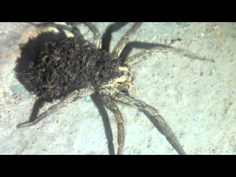 паук....и