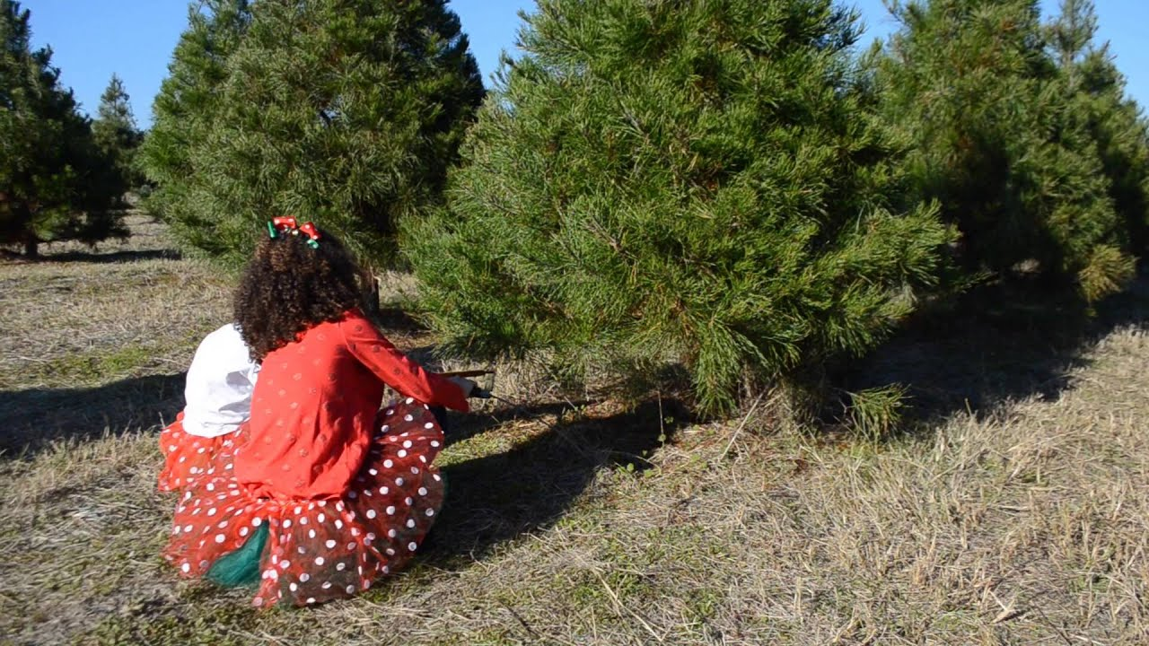 Elgin Christmas Tree Farm.Elgin Christmas Tree Farm Explore Bastrop County