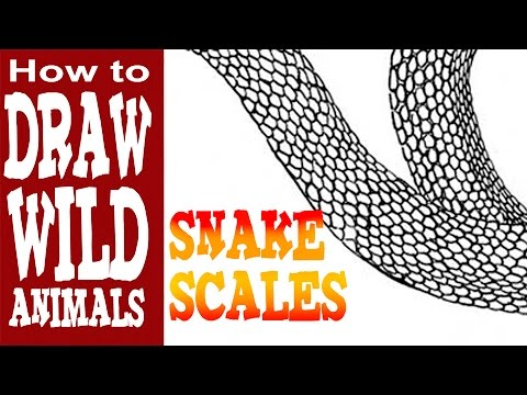 How To Draw Snake Scales Youtube