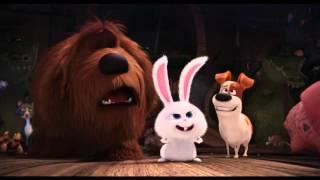 Kijk Secret Life of Pets filmpje