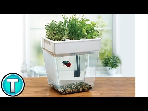 The Aquaponics Fish Tank