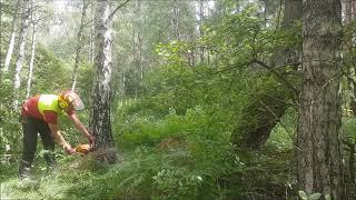 Praca w Lesie - wycinkowy mix
