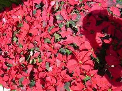 Ngoi nha hoa hong