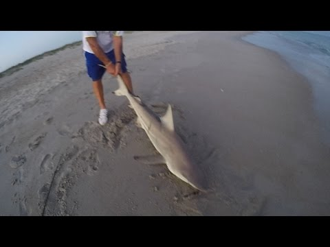Catching a large shark off Atlantic beach, NC.