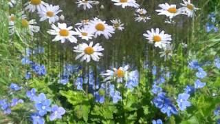 Музыка  полевых цветов
