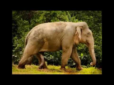 sad music endangered animals