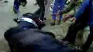 qurbani 2009.3gp
