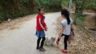 Bé Thảo Linh cùng pet Ken đi dạo