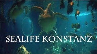 11 - Sealife Konstanz