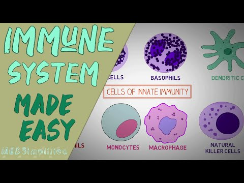 IMMUNE SYSTEM MADE EASY- IMMUNOLOGY INNATE AND ADAPTIVE IMMUNITY SIMPLE ANIMATION