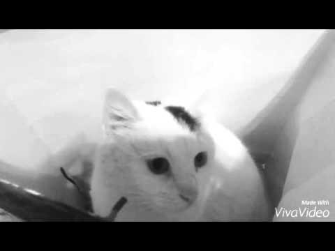 Был у ивангая кот