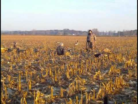 Lay Down Blinds >> Goose Hunting with homemade layout blinds in a cornfield ...