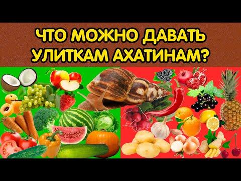 Как часто кормить улиток ахатин в домашних условиях