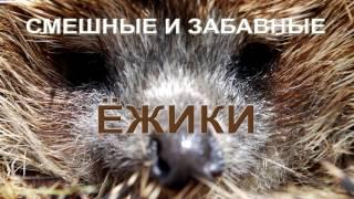 Смешные и прикольные животные - ёжики : Funny and cute animals - hedgehogs