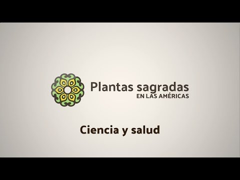 Sacred Plants for Addiction Treatment | Plantas Sagradas en las Américas