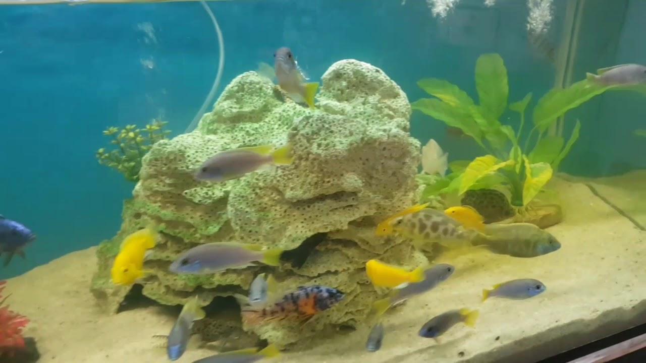 Keren Banget Akuarium Pasir Laut Dengan Batu Karang Yang Besar Bangettt Youtube