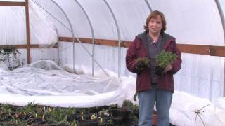 Gardening Lessons : How to Grow Herbs in a Greenhouse