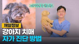 강아지 치매 증상, 집에서 자가 진단 하는 방법!  |…