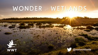 What are wetlands? | WWT