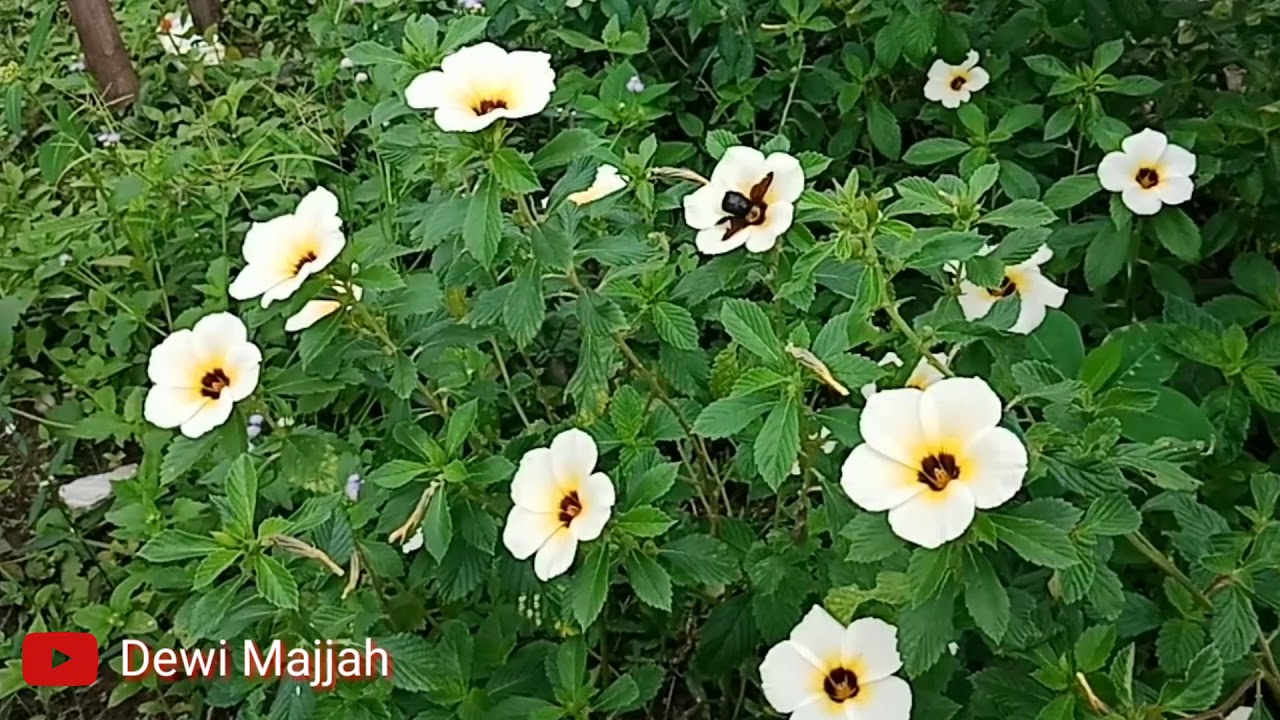 Kumbang dan Bunga di Pagi Hari Pedesaan - YouTube