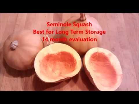 Best squash for storage  - seminole