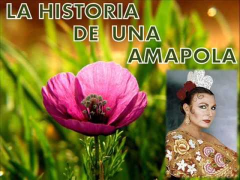La historia de una amapola (Rocío Jurado)