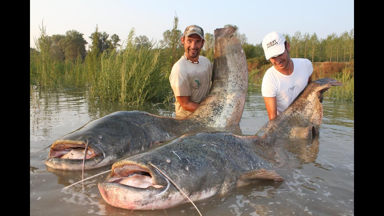 Catfish In Spinning Monster Record Over 250 Pounds By
