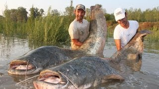 Repeat youtube video CATFISH IN SPINNING MONSTER RECORD OVER 250 POUNDS by CATFISHING WORLD