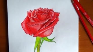 How to draw a Rose, flowers,  Como dibujar una rosa, Как нарисовать розу