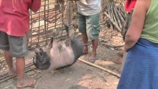 When in Laos do as the Laotians do... Travel Blog part 2