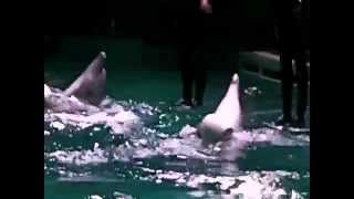 dolphins show - magic moments