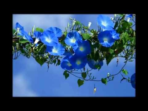 цветы многолетники фото и названия