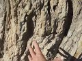 Proof of Fossilized trees in Big Bend, Tx
