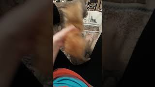 Помагите определить пол котенка 😩