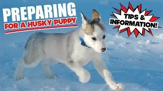 BRINGING HOME A HUSKY PUPPY - Everything You Need To Know To Prepare!