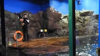 Океанариум | ТРК Планета Нептун | СПб (Шоу с тюленями)
