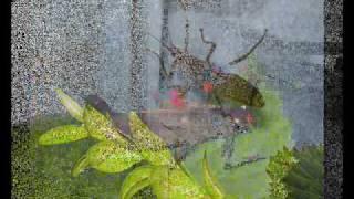 Alle meine Insekten...
