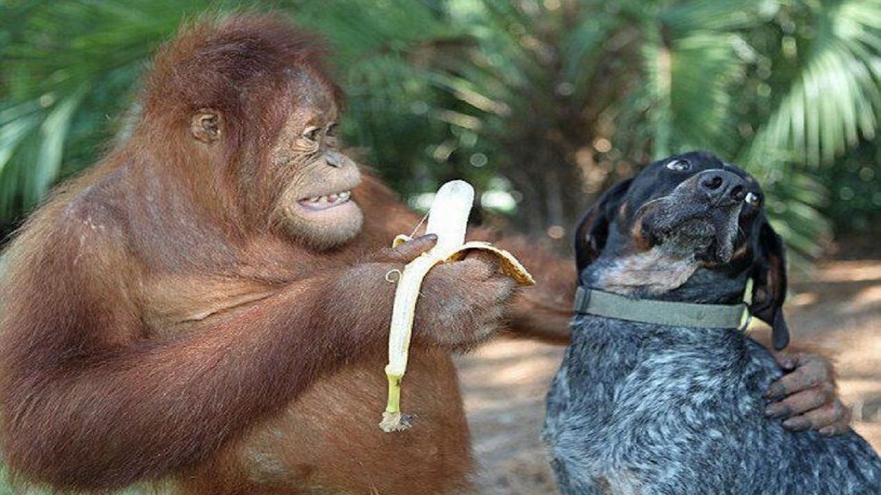 Забавные и смешные животные видео